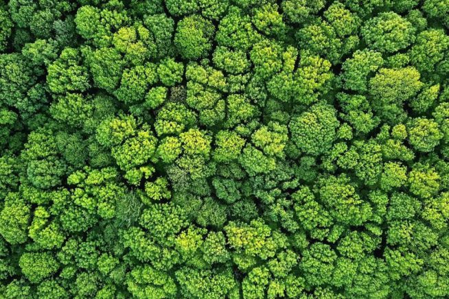 trees_aerial